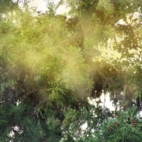 A2Care花粉症対策